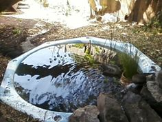 Repurposed hot-tub shell now contains a backyard fish pond.