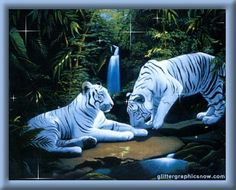 Spirit of White Tiger Role: Seeker of Personal Truth Lesson: Power of Conviction Element: Fire Wind: South Recalling the Inner Child Medicine: Uniqueness Keywords: Divining Personal Truth. Tiger Images, Tiger Pictures, Animal Pictures, Art Tigre, Lion Tigre, Beautiful Cats, Animals Beautiful, Cute Animals, Wild Animals