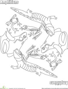 Kids can let their creativity loose on this amphibians coloring page. Can your child name each one?