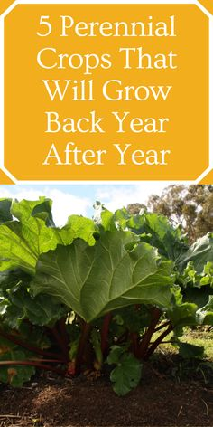 Veg Garden, Garden Soil, Garden Seeds, Garden Ideas Budget Backyard, Garden Planning, Backyard Patio, Yard Ideas, Gardening For Beginners, Gardening Tips