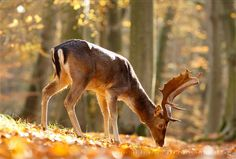 King of the Forest by Roeselien Raimond on 500px