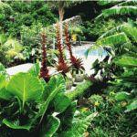 Sub tropical garden