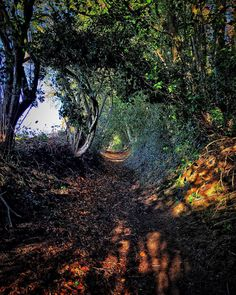 Autumnal pathways. #autumn #leaves #path #journey  #explore_treetops #_stop_and_stare_ #tree_magic #Igerssurrey #nature_brilliance #exceptional_pictures #igbellus #incredible_shot #fingerprintofgod #picture_to_keep #gottalove_a #Colors_of_day #top_world_shot #fortheloveofbranches #wt_surrey #shotoniphone #beaniedee