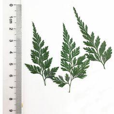 2 Pressed Leaves, Diy Jewelry Supplies, Dried Flowers, Green Colors, Pressing Flowers, Tie Dye, Green, Color, Flower Preservation