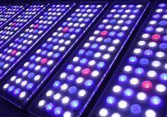 Orphek LED revolution for Reef aquarium This is Part three in a series of articles and in this article we will focus on the LEDs we use. Aquarium Lamp, Mini Aquarium, Led Aquarium Lighting, Plant Lighting, Reef Aquarium, Aquarium Fish Tank, Planted Aquarium, Fish Tank Lights, Aquarium Landscape