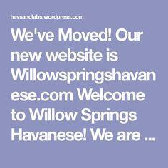 We've Moved! Our new website is Willowspringshavanese.com  Welcome to Willow Springs Havanese! We are a small hobby breeder of Havanese puppies located outside of Raleigh, NC. I have been an animal lover all of my life and a Havanese lover since 2008. My husband had always had Labradors and had been breeding them for… Havanese Puppies For Sale, Willow Springs, Of My Life, Labradors, Husband, Animal, Website, Wigs, Animaux