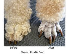 Grooming Your Furry Friend: Does A Poodle Have To Be Groomed Like A Poodle?