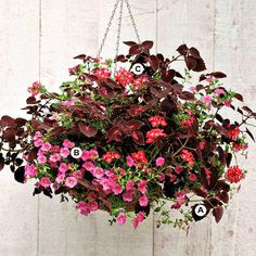 Create a Contrast Even though they're old-fashioned, geraniums are still a top pick for hot, sunny spots -- and they m...
