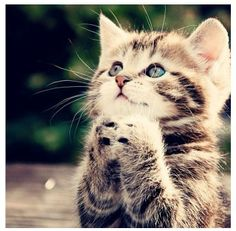 Cat praying.. so cute!