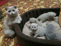 Мама-кошка и ее котятки