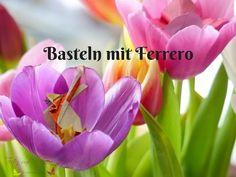 Basteln mit Ferrero - von Küsschen bis zu Raffaello Ferrero, Origami, Plants, Videos, Tulips, Kiss, Raffaello, Easter Bunny, Blogging