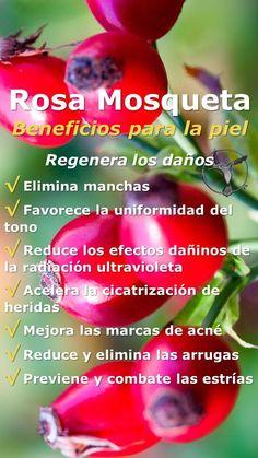 #salud #mujer #rosa #mosqueta #beneficios #flor #propiedades #acne #aceite #cabello #color #cicatriz #estrías #manchas #oleo #pelo #planta #usos