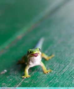 Gecko critter-things
