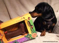 Chocolate dachshund for Easter basket