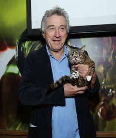 Robert de Niro and Kitten   mascotas