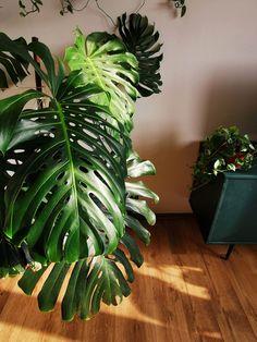 Domowa dżungla #2