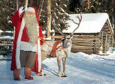 Das Lieblingsrentier des Weihnachtsmannes in Lappland in Finnland