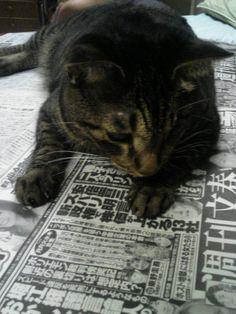 ネコと新聞9