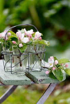 Blossoms in jars.