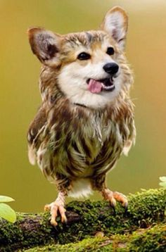 21 Animal Hybrids That Are Horrifyingly Hilarious | Pleated-Jeans.com