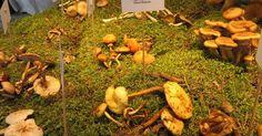 Loodusmuuseum https://www.pinterest.com/materjal/pins/