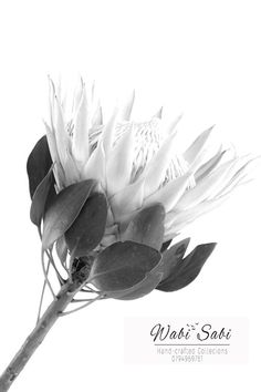 King Protea in Monochrome Tea Towel White Tea Towels, Growth And Decay, King Protea, Japanese Aesthetic, Beautiful Artwork, Black And White Photography, Fine Art Photography, Color Show, My Images