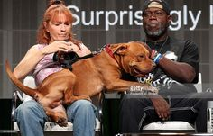 Founder of Villalobos Rescue Center Tia Torres and Earl Moffett speak onstage at the 'Pit Bulls & Parolees' panel during the Discovery Communications portion of the 2014 Summer Television Critics Association at The Beverly Hilton Hotel on July 9, 2014 in Beverly Hills, California.