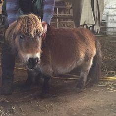 Teeny tiny pony Pony, Horses, Random, Animals, Pony Horse, Animales, Animaux, Ponies, Animal