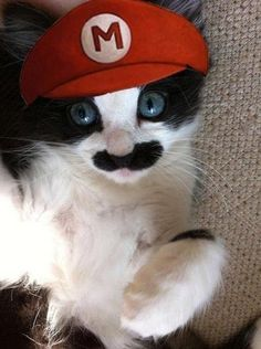 Funny Pictures - Mario Kitty - www.funny-pictures-blog.com