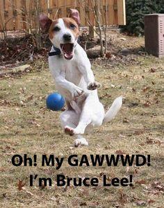 10 Funny Pet Memes   Some Pets!