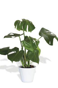 21 Ideas De Plantas Interior Plantas De Interior Plantas Decoracion Plantas