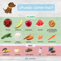 Alimentos que pueden comer los perros