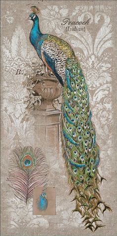 Peacock on Linen (Chad Barrett)