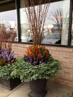 winter-container-arrangement.jpg by Deborah Silver