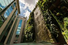 What a cool idea.  World's tallest vertical garden on the outside of a shopping mall in Madrid.