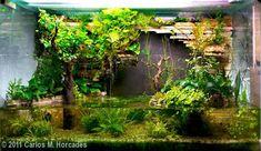 2011 AGA Aquascaping Contest - Entry #239