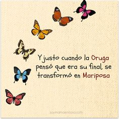 Y justo cuando la Oruga pensó que era su final, se transformó en Mariposa. And just when the caterpillar thought it was her end, she transformed into a butterfly. Positive Phrases, Motivational Phrases, Positive Quotes, Inspirational Quotes, Positive Mind, Positive Vibes, More Than Words, Spanish Quotes, Wise Words