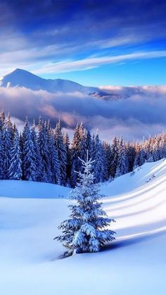 Conifer forest clearing hills snow winter mountains