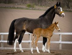 Warmblood Mare & Foal by Simply Horses