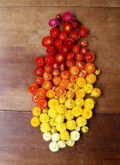 #Ombre #Flower #Garlands