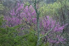 spring in the woods pictures | the color of the spring woods is pale and delicate small leaves on the ...