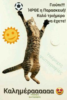 Good Night, Good Morning, Cats, Happy, Animals, Decor, Fotografia, Nighty Night, Buen Dia