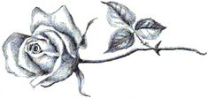 Step finished long stem roses How to Draw Long Stem Roses with Easy Step by Step Drawing Tutorial
