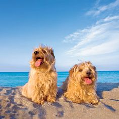 Summer pet safety tips - Veterinarian Dr. Stephen Samson tells us what we need to know about playing with our pets during the dog days of summer