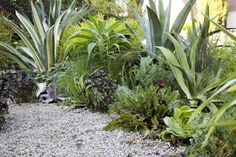 From Ivette Soler's book The Edible Front Yard, this Southern California garden incorporates a mix of stylish ornamentals and edibles.