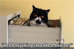 Administrative Assistant Cat Excels at Certain Skills