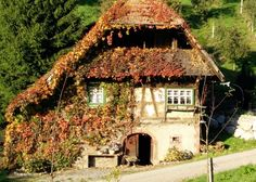 Old House, Black-Forest, Durbach, Baden-Württemberg.