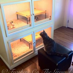 My hand built 2 story chick brooder (or cat entertainment system) that I made this summer.