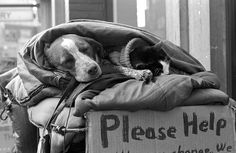 Homeless Humans And Their Dogs Share The Sweetness Of Their Unconditional Love https://www.petsofthehomeless.org/