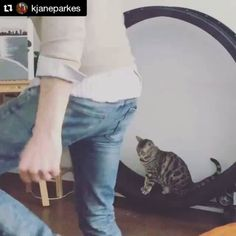New family fitness tricks  @pfroklage #thisismylifenow #caturday #workout #bengalbeauty #gettingfit #bikiniseason #comingup #kittycat #shredz #catsofinstagram #instacat #catstagram #onefastcat #catwheel #catexercise #catface #catlover  Check out the Cat Exercise Wheel at: http://onefastcat.com